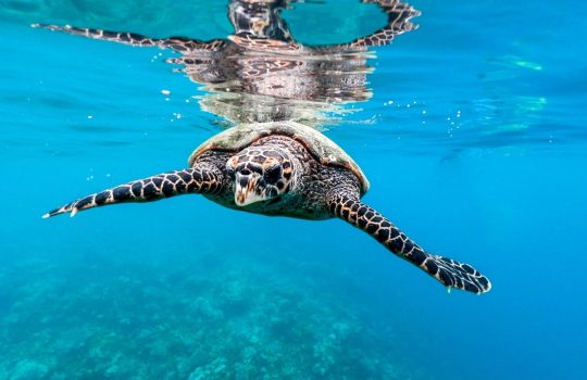 Visit Maldives: For Lovers Of Marine Life